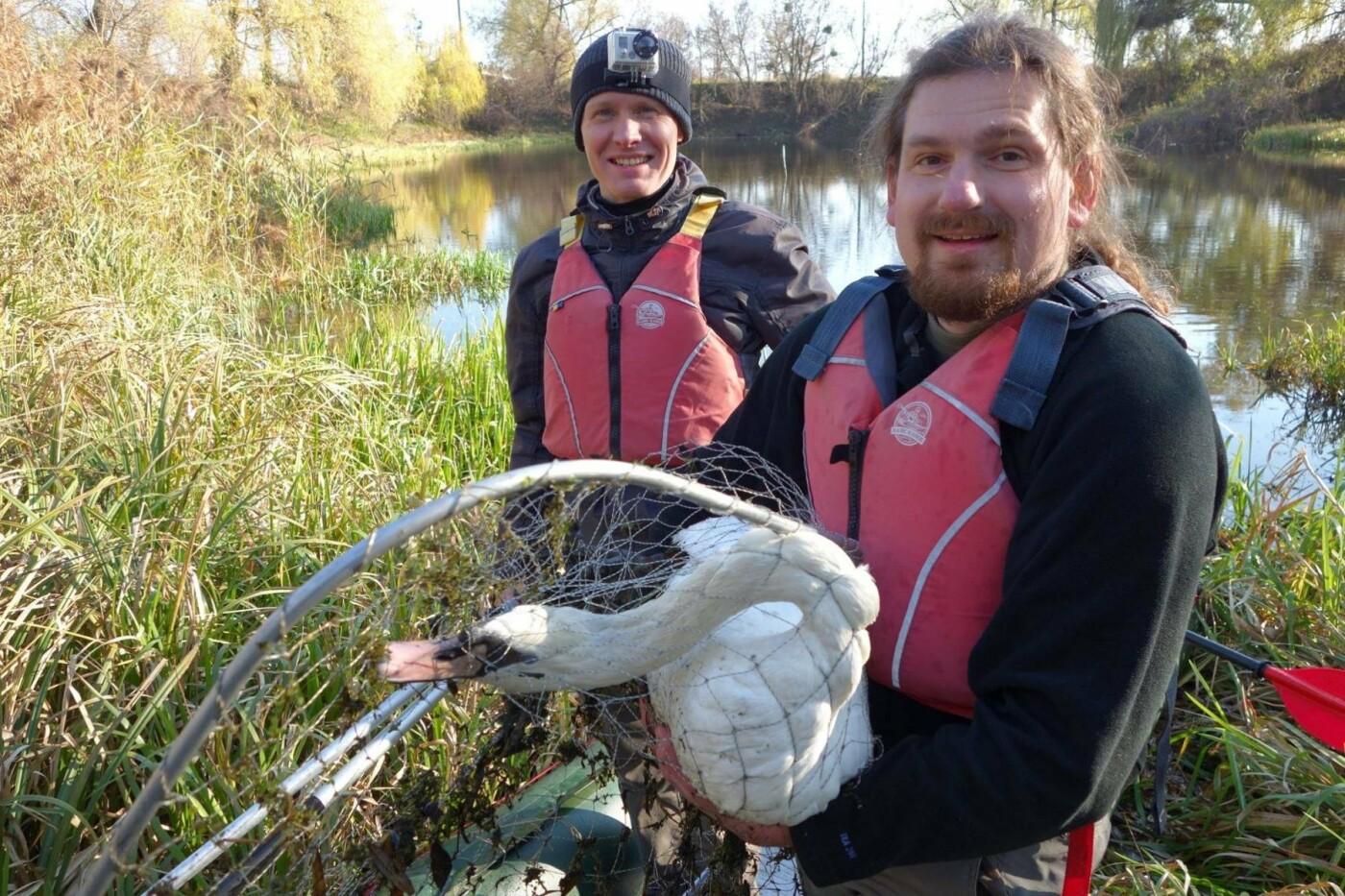 В Изяслав за птицей: Киевская команда спасения животных спасла лебедя, фото-4