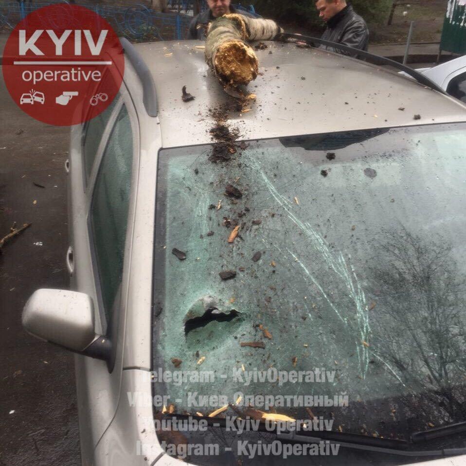 В Киеве дерево рухнуло на машину (ФОТО), фото-1