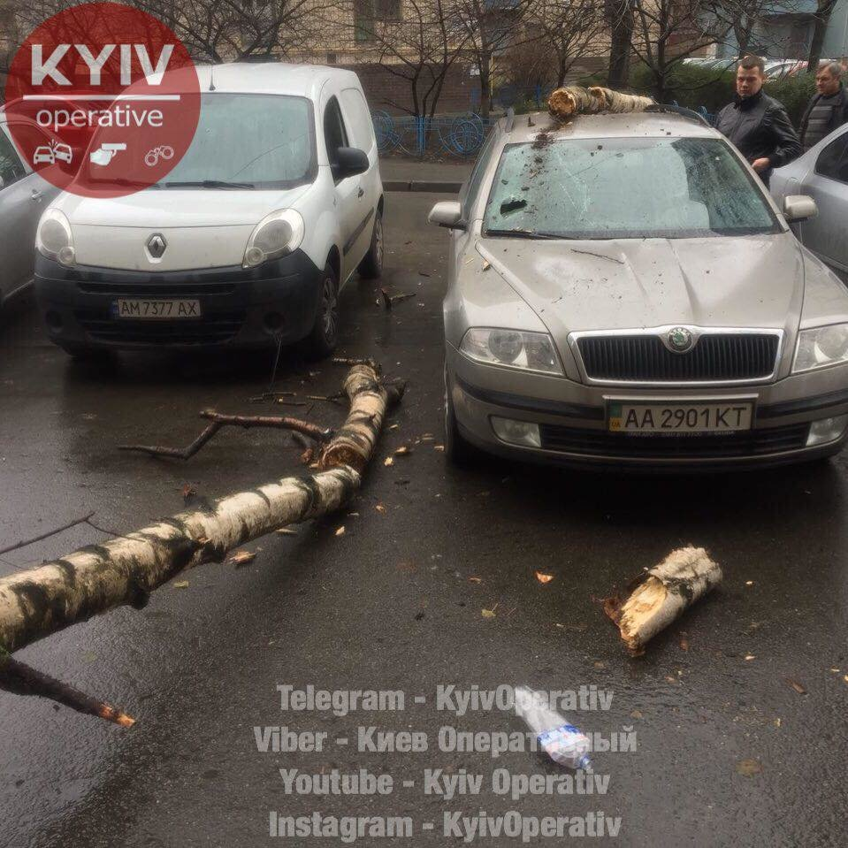 В Киеве дерево рухнуло на машину (ФОТО), фото-2