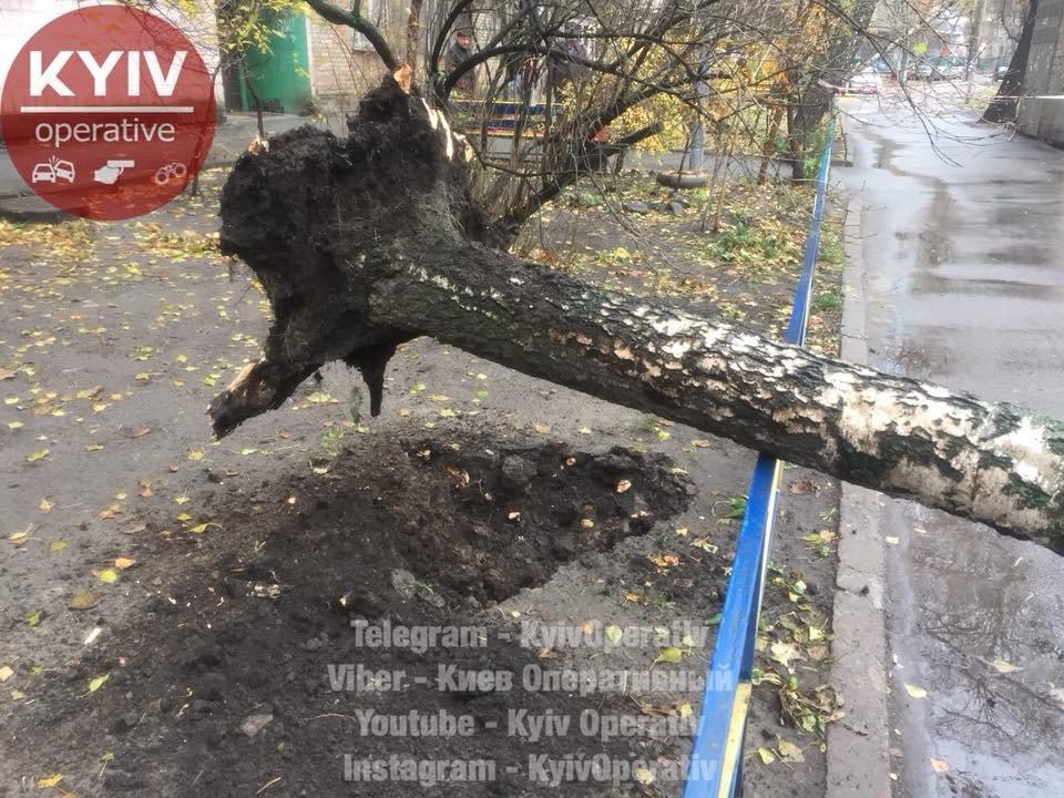 В Киеве дерево рухнуло на машину (ФОТО), фото-3