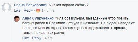 В Киеве на человека напали бойцовые собаки, фото-2