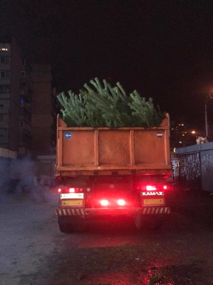 Киевские волонтеры отвезли на корм животным 60 тонн брошенных новогодних елок , фото-1