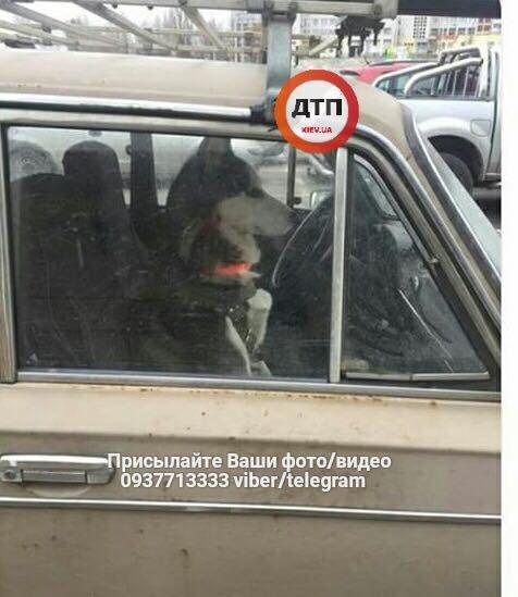 На Оболони в машине закрыли собаку на два дня (ФОТО), фото-2