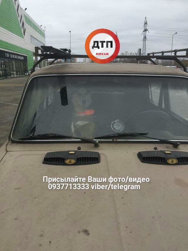На Оболони в машине закрыли собаку на два дня (ФОТО), фото-1