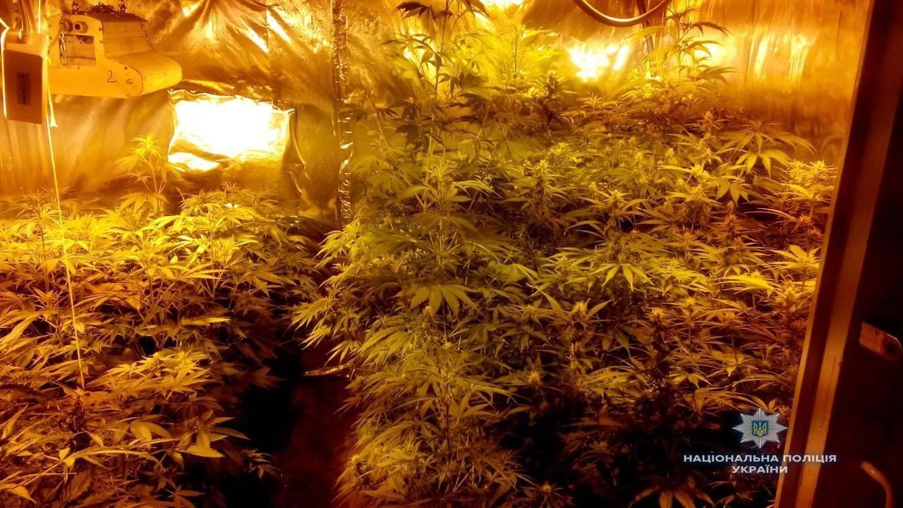В доме под Киевом нашли плантацию элитной конопли (ФОТО), фото-3