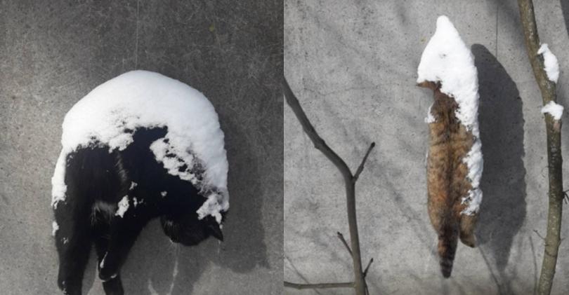Люди как звери: резонансные убийства животных в Киеве, о которых говорили все, фото-22