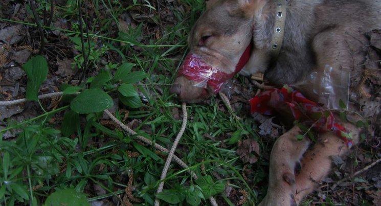 Люди как звери: резонансные убийства животных в Киеве, о которых говорили все, фото-8