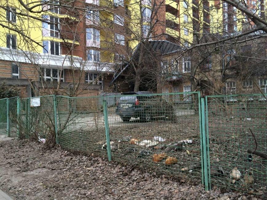 Люди как звери: резонансные убийства животных в Киеве, о которых говорили все, фото-2