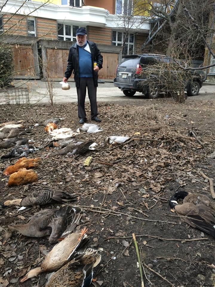 Люди как звери: резонансные убийства животных в Киеве, о которых говорили все, фото-3