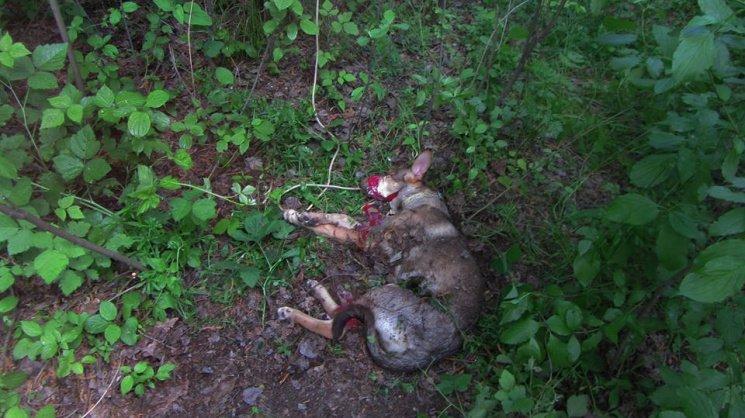 Люди как звери: резонансные убийства животных в Киеве, о которых говорили все, фото-7