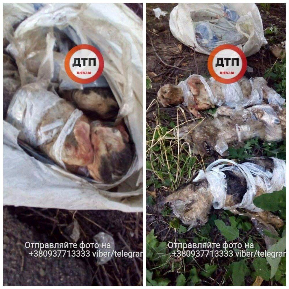 Люди как звери: резонансные убийства животных в Киеве, о которых говорили все, фото-18