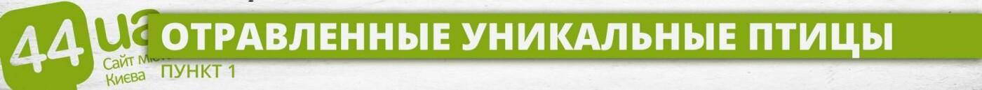 Люди как звери: резонансные убийства животных в Киеве, о которых говорили все, фото-1