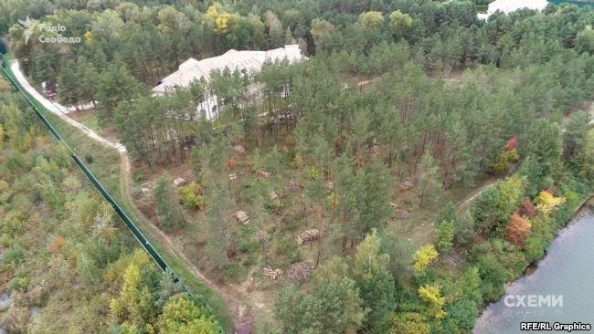 Под Киевом возле дома экс-министра вырубают государственный лес, - СМИ, фото-1