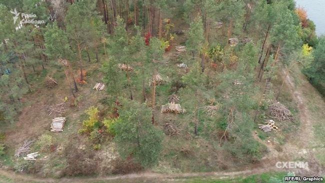 Под Киевом возле дома экс-министра вырубают государственный лес, - СМИ, фото-3