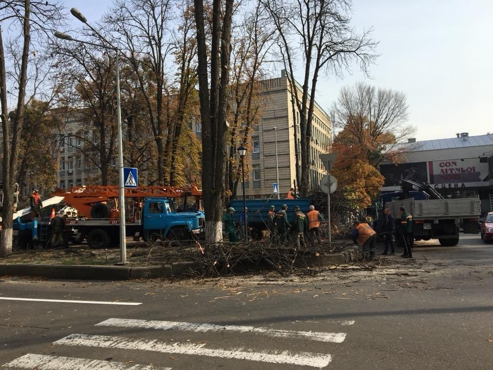 В Киеве на Липской аллее высаживают сакуры, - ФОТО, фото-2