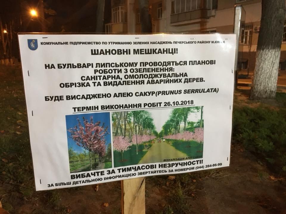 В Киеве на Липской аллее высаживают сакуры, - ФОТО, фото-1
