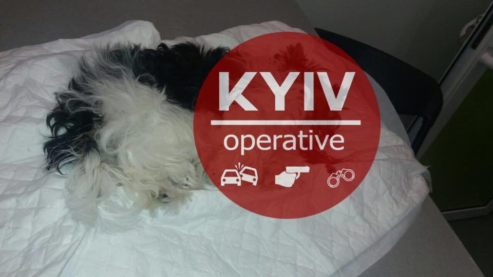 В Киеве мужчина избил жену, выбросил с 12-го этажа собаку и угрожал расправой соседке, фото-2
