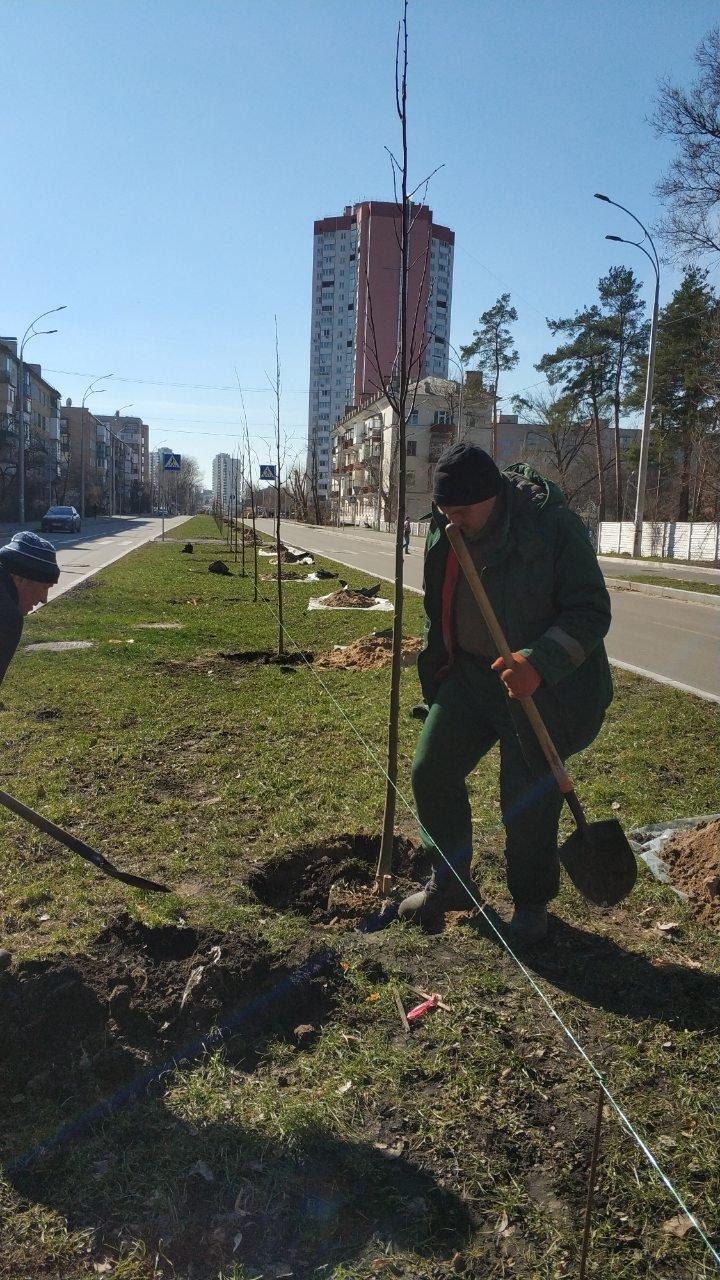 На Русановской набережной в Киеве высадили новые сакуры, - ФОТО, фото-3