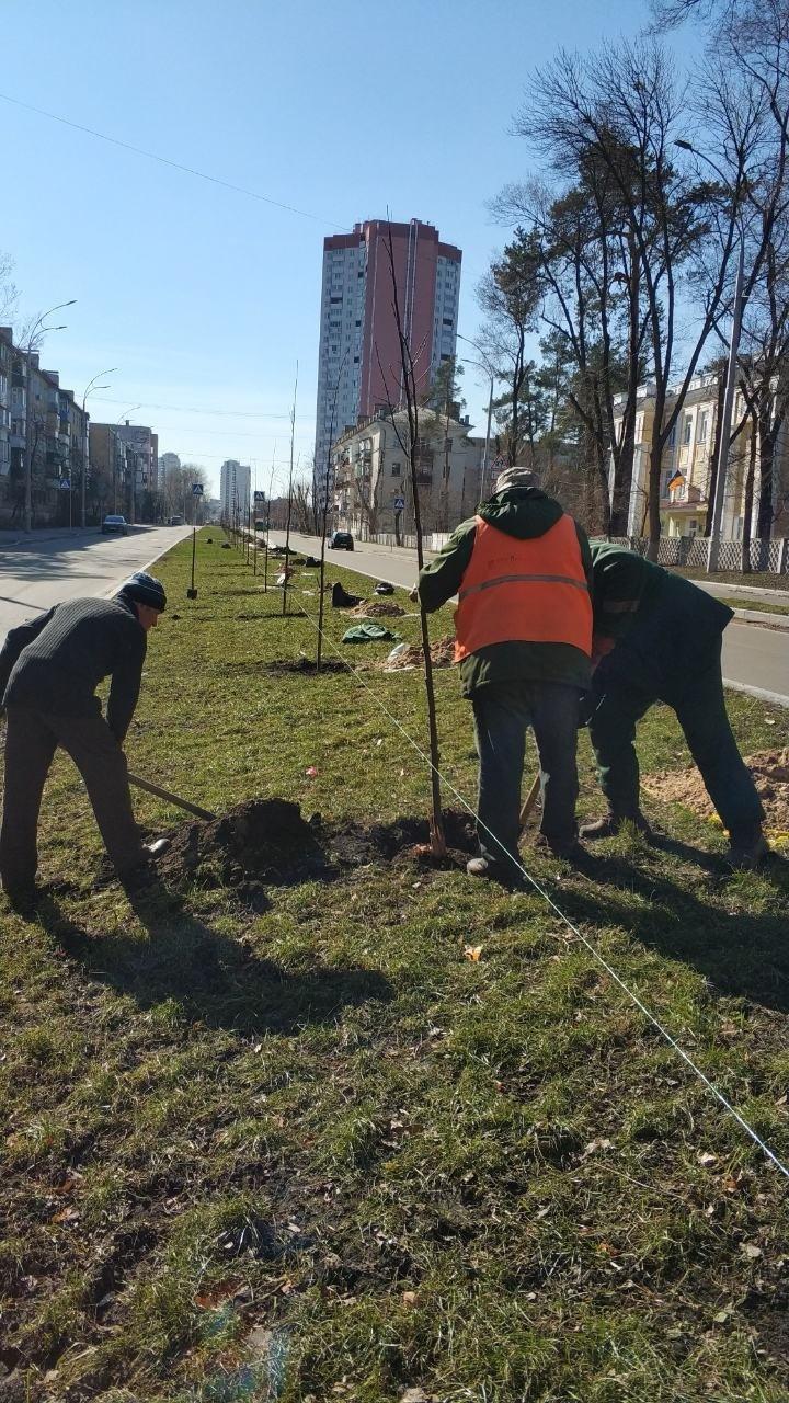 На Русановской набережной в Киеве высадили новые сакуры, - ФОТО, фото-4