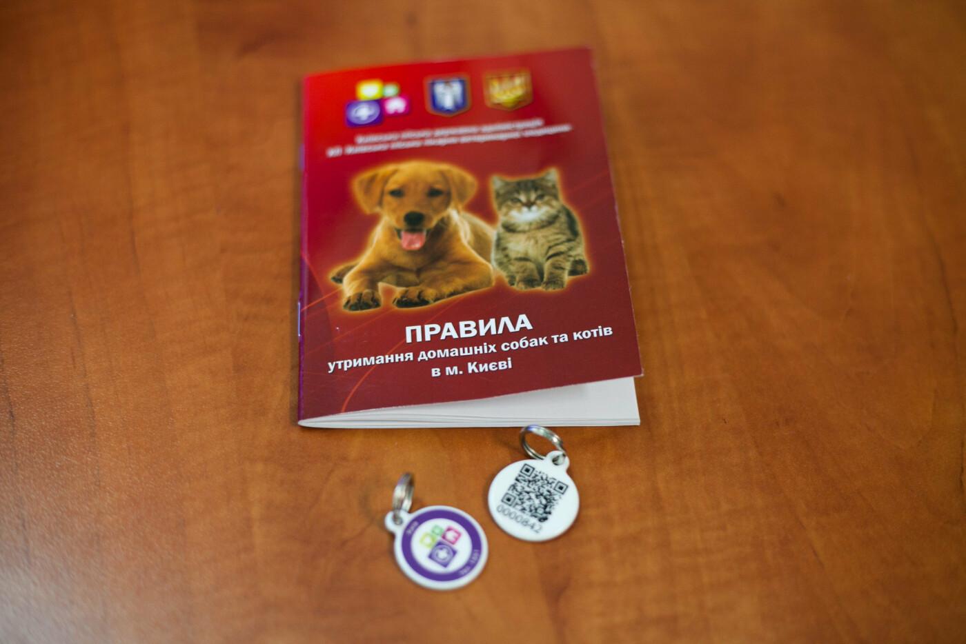 Не теряй кота: в Киеве представили систему регистрации домашних и бездомных животных, фото-3