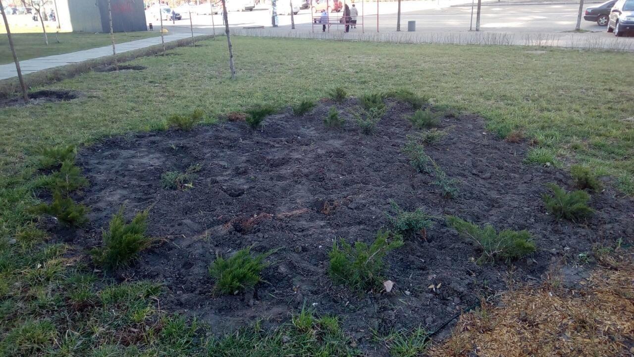 Розы, можжевельники и сосны: на Троещине из сквера украли сотни новый растений, - ФОТО, фото-4