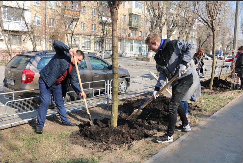 В Соломенском районе высадили аллею гипоаллергенных акаций, - ФОТО, фото-3, Фото пресс-службы Соломенской РДА