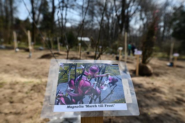 В Киеве обустроили самый большой сад магнолий, - ФОТО, фото-2