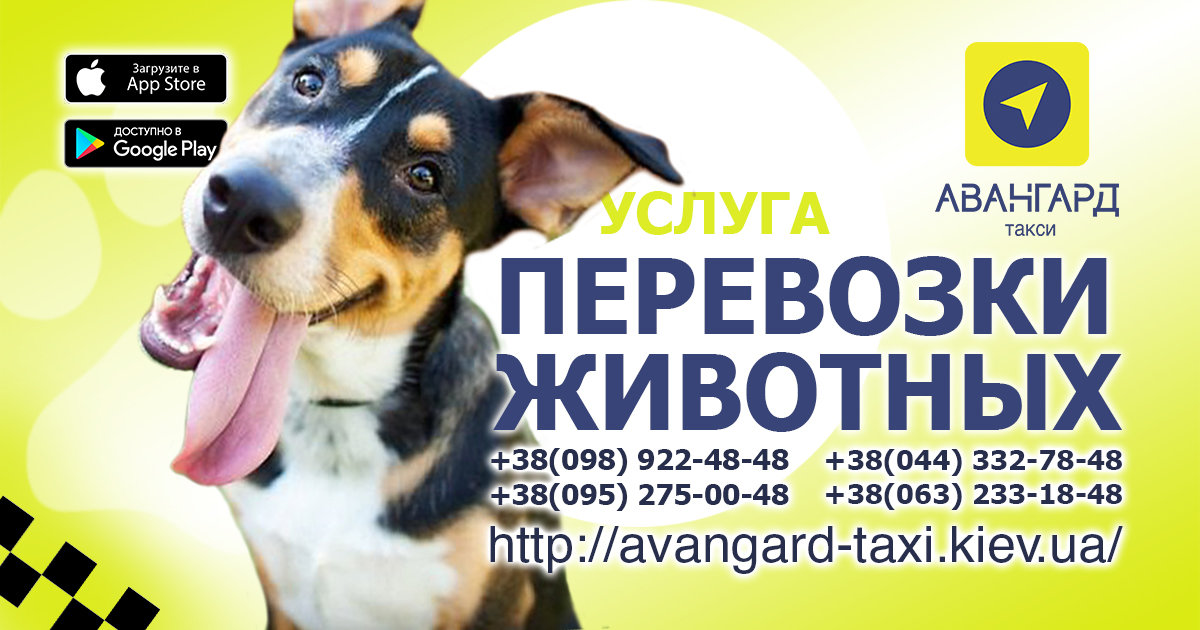 Такси в Киеве: что есть и чего ждем?, фото-5