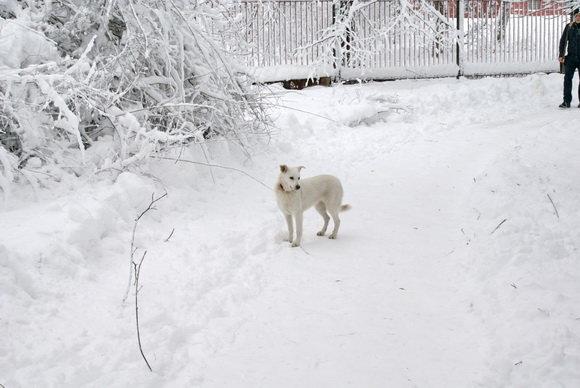 Каким был первый день зимы в Киеве 10 лет назад, ФОТО, фото-6
