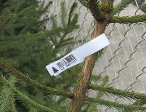 Как проверить легальность происхождения новогодней елки, - ФОТО , фото-2