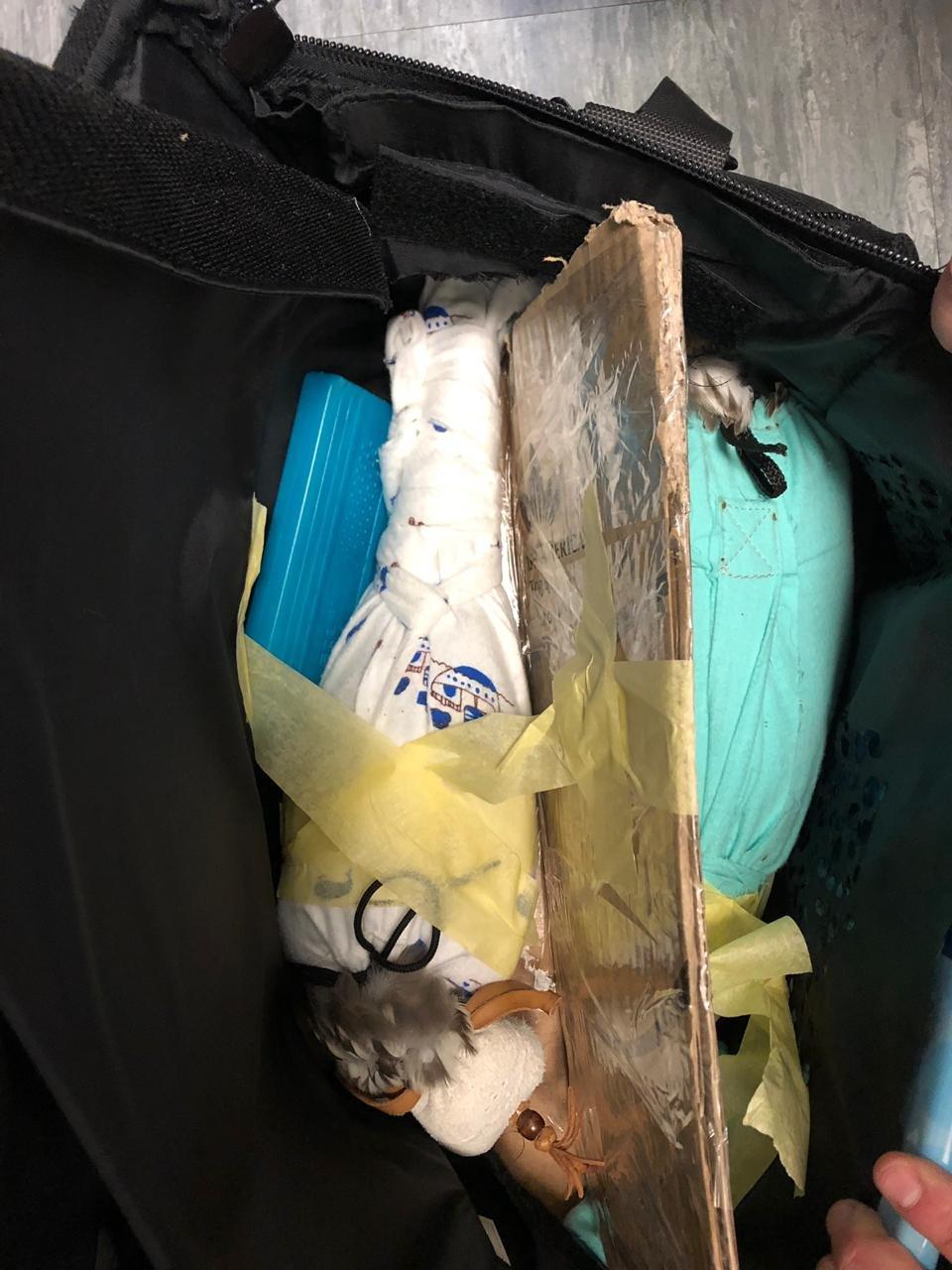 Мужчина пытался вывезти из Борисполя в Эмираты редких птиц, - ФОТО, ВИДЕО, фото-2