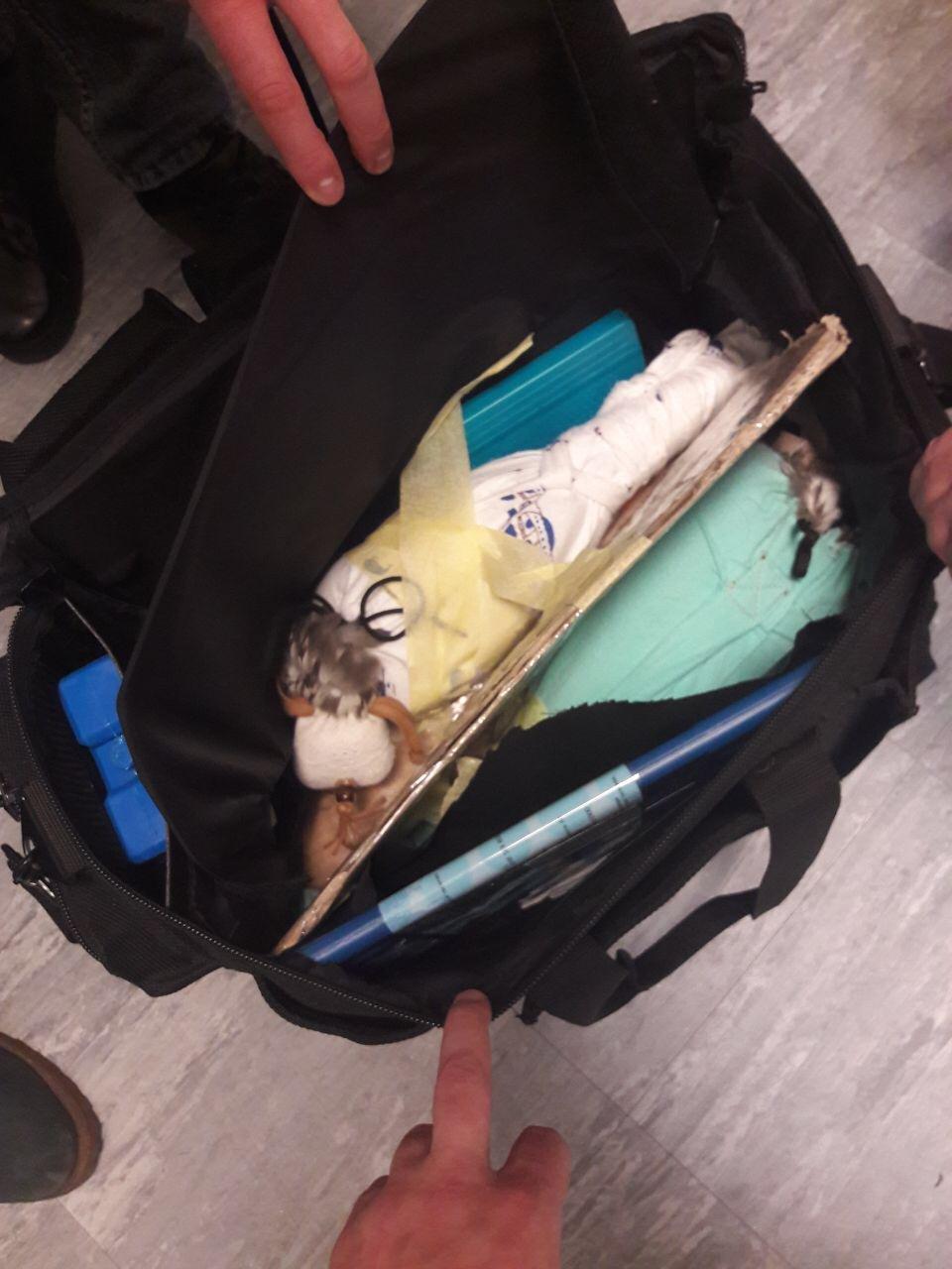 Мужчина пытался вывезти из Борисполя в Эмираты редких птиц, - ФОТО, ВИДЕО, фото-1