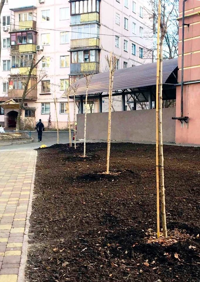 Детская площадка, растения, лавки: как выглядит обновленный сквер на Соломенке, - ФОТО, фото-4