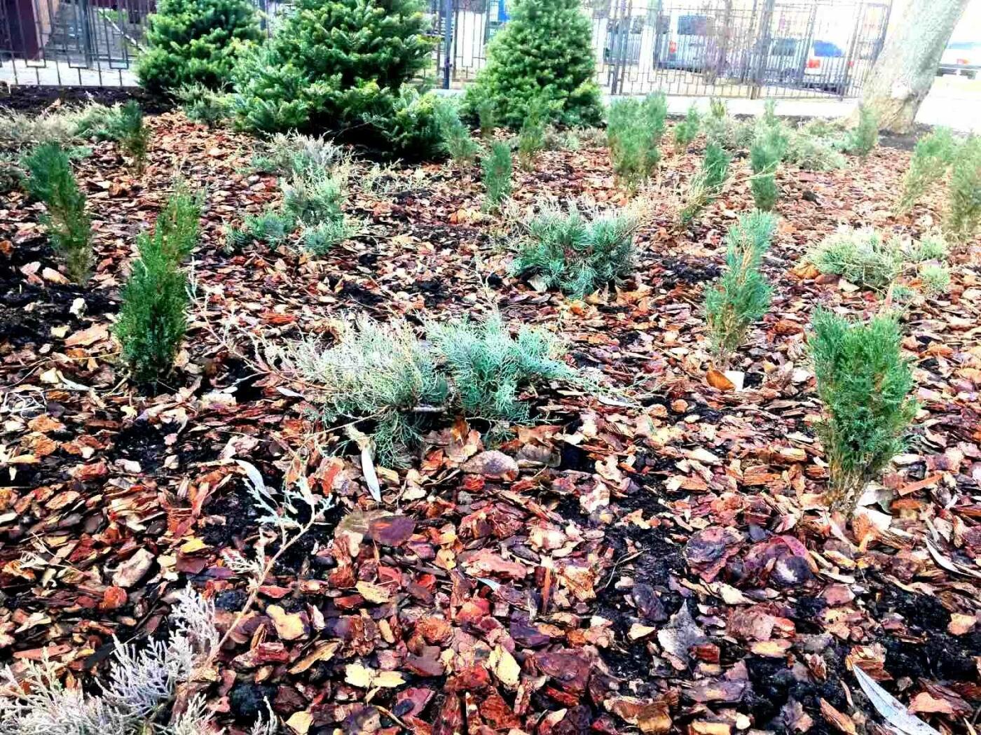 Детская площадка, растения, лавки: как выглядит обновленный сквер на Соломенке, - ФОТО, фото-2