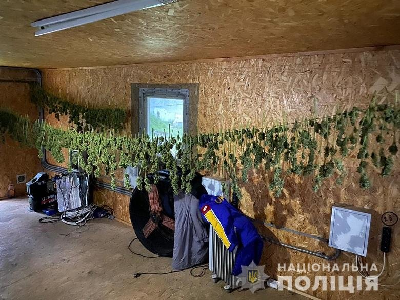 В Киевской области нашли плантацию конопли, - ФОТО, фото-3