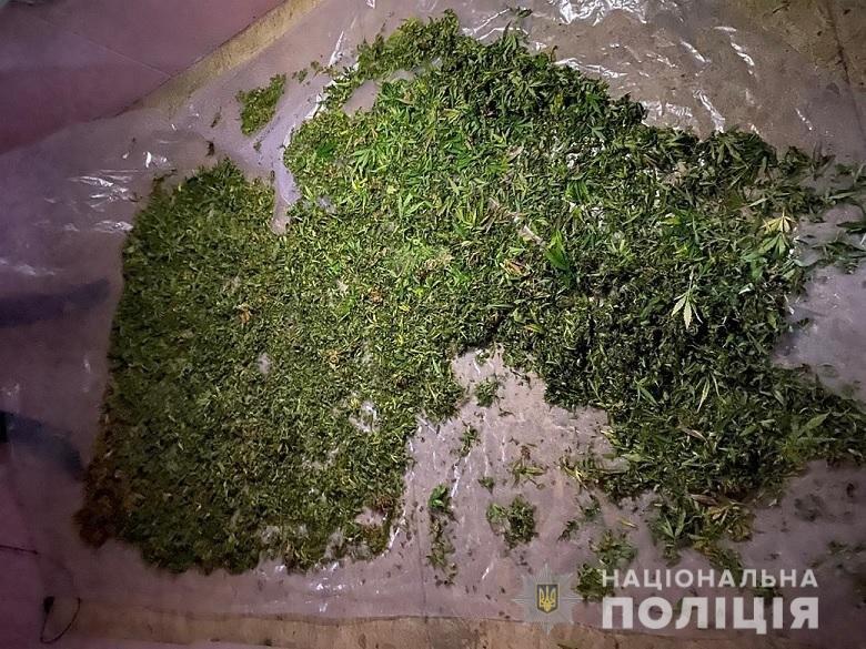 В Киевской области нашли плантацию конопли, - ФОТО, фото-2