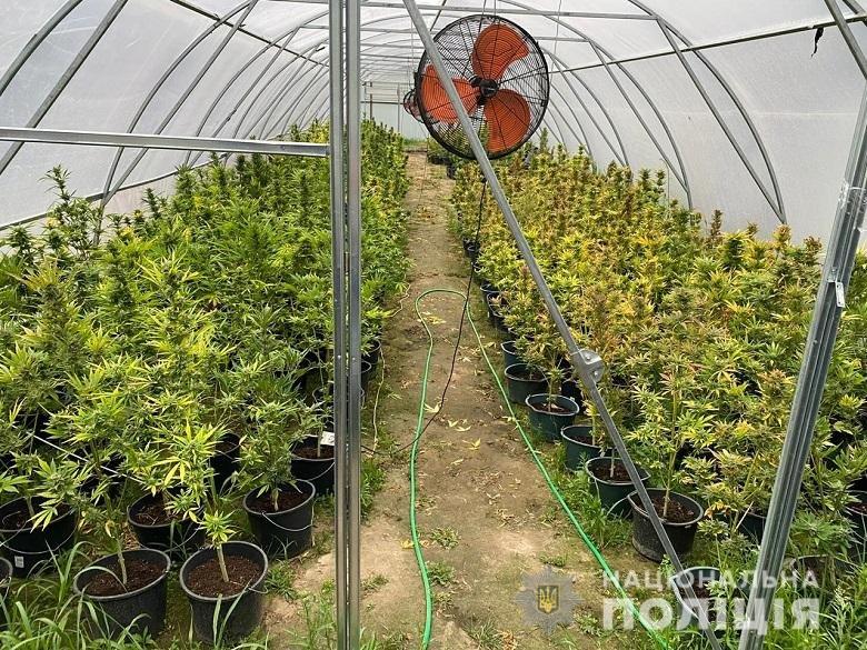 В Киевской области нашли плантацию конопли, - ФОТО, фото-1