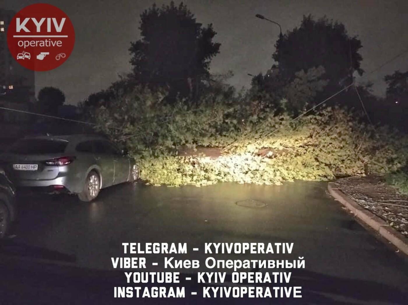 Ураган в Киеве сегодня ночью повалил десятки деревьев, ФОТО, фото-1
