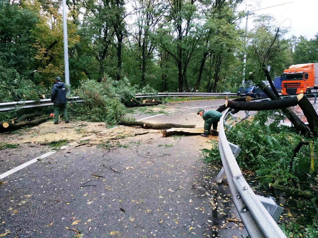 Ураган в Киеве сегодня ночью повалил десятки деревьев, ФОТО, фото-5, Фото Киевзеленстроя