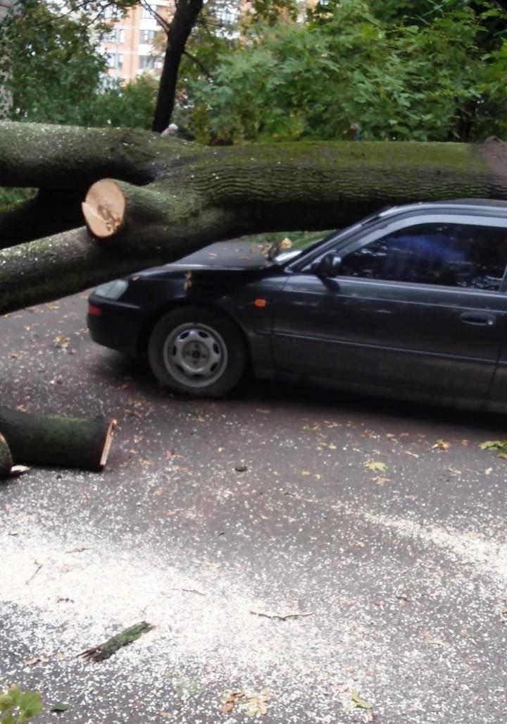 Ураган в Киеве сегодня ночью повалил десятки деревьев, ФОТО, фото-6, Фото Киевзеленстроя