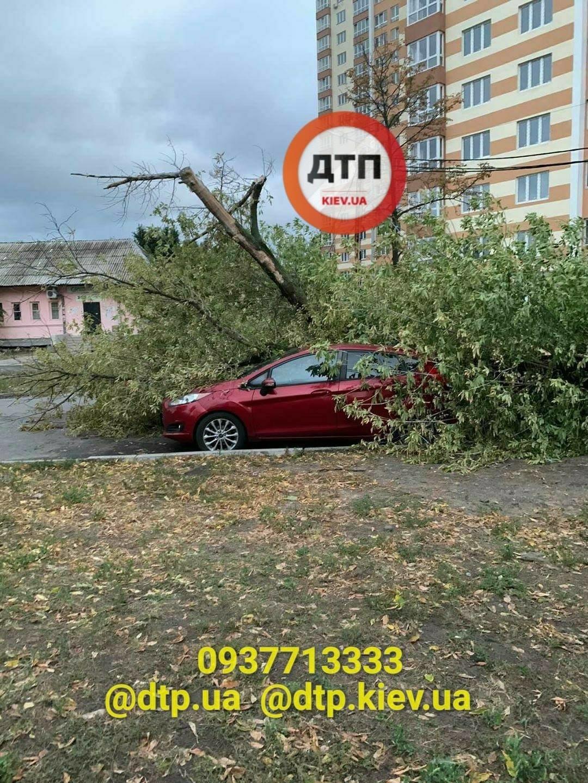 Ураган в Киеве сегодня ночью повалил десятки деревьев, ФОТО, фото-2
