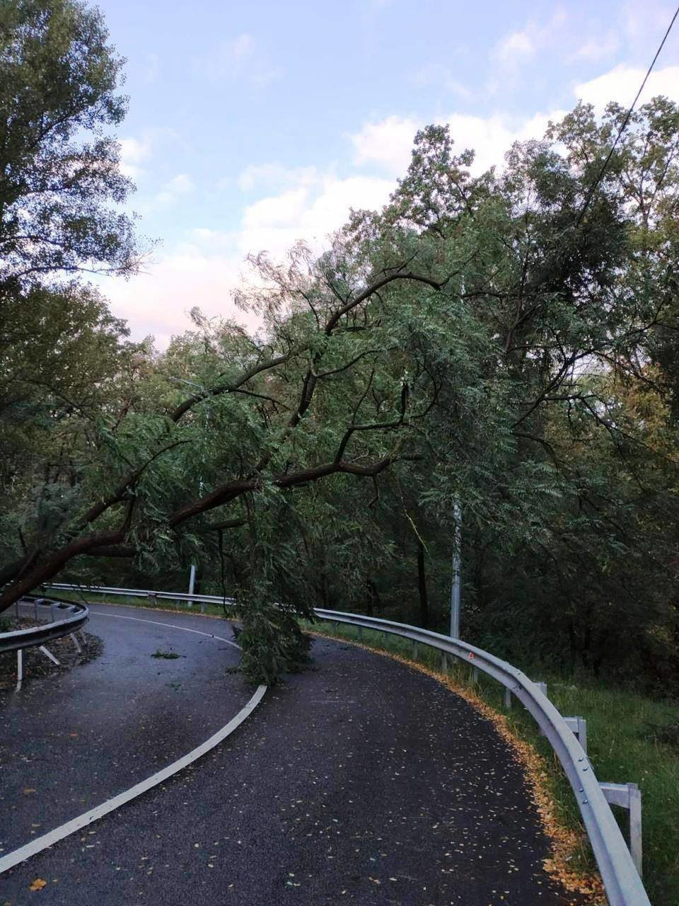 Ураган в Киеве сегодня ночью повалил десятки деревьев, ФОТО, фото-8, Фото Киевзеленстроя