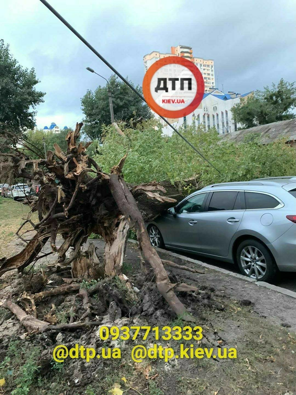Ураган в Киеве сегодня ночью повалил десятки деревьев, ФОТО, фото-3