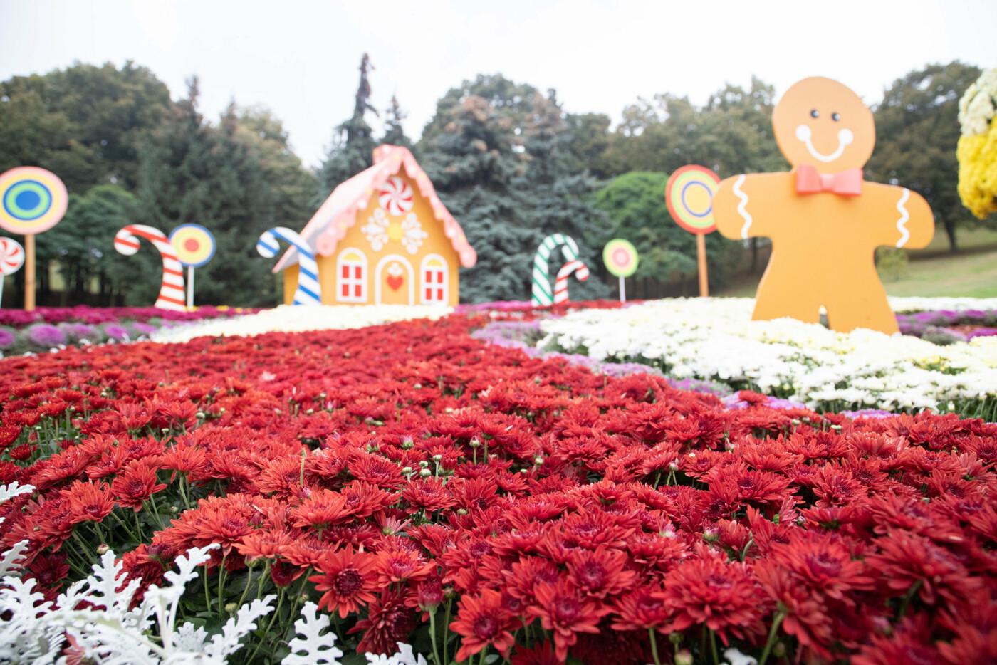 В Киеве на Певческом поле открылась выставка хризантем, ФОТО, фото-7