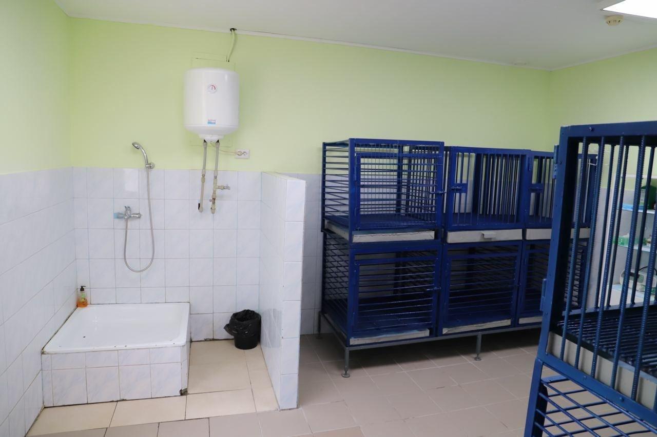 В Киеве на Подоле открылось инфекционное отделение для собак, ФОТО, фото-5