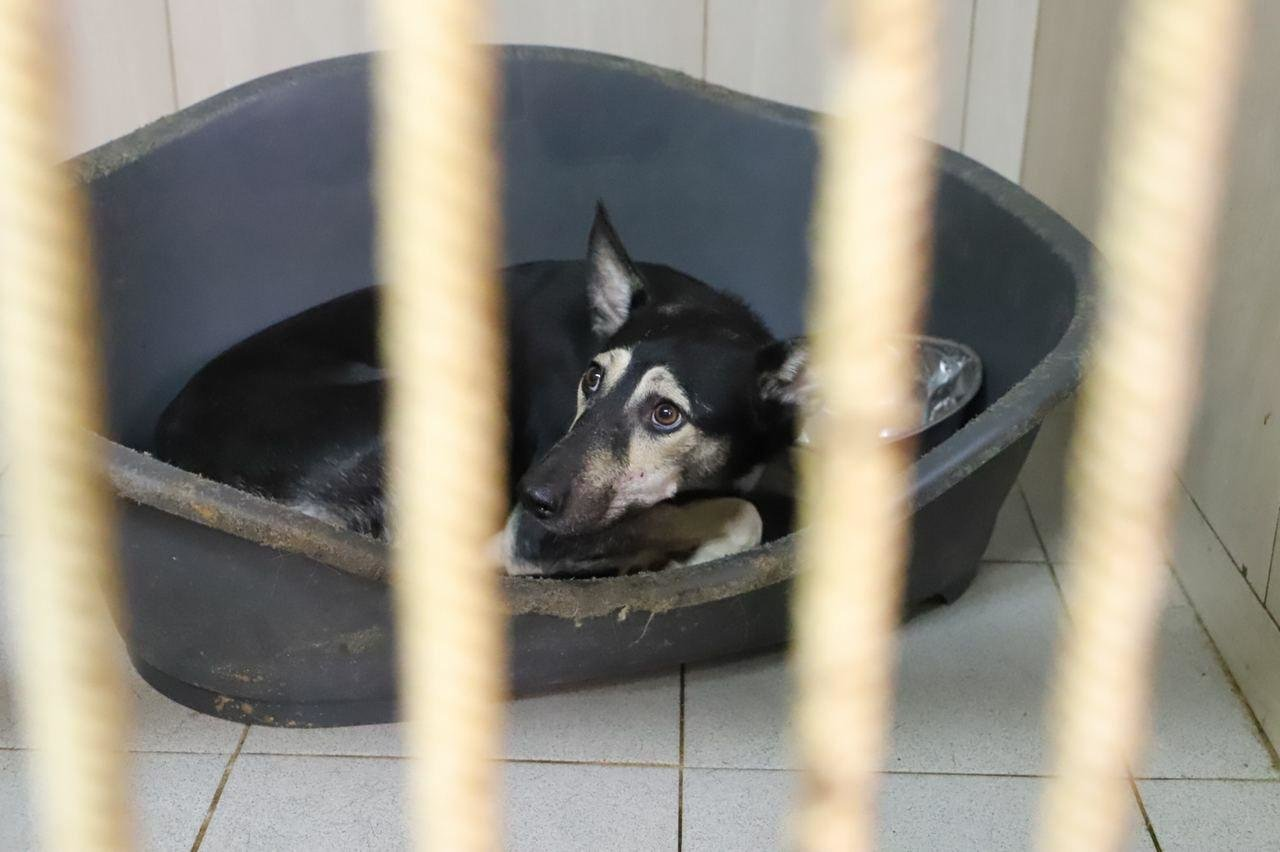 В Киеве на Подоле открылось инфекционное отделение для собак, ФОТО, фото-4