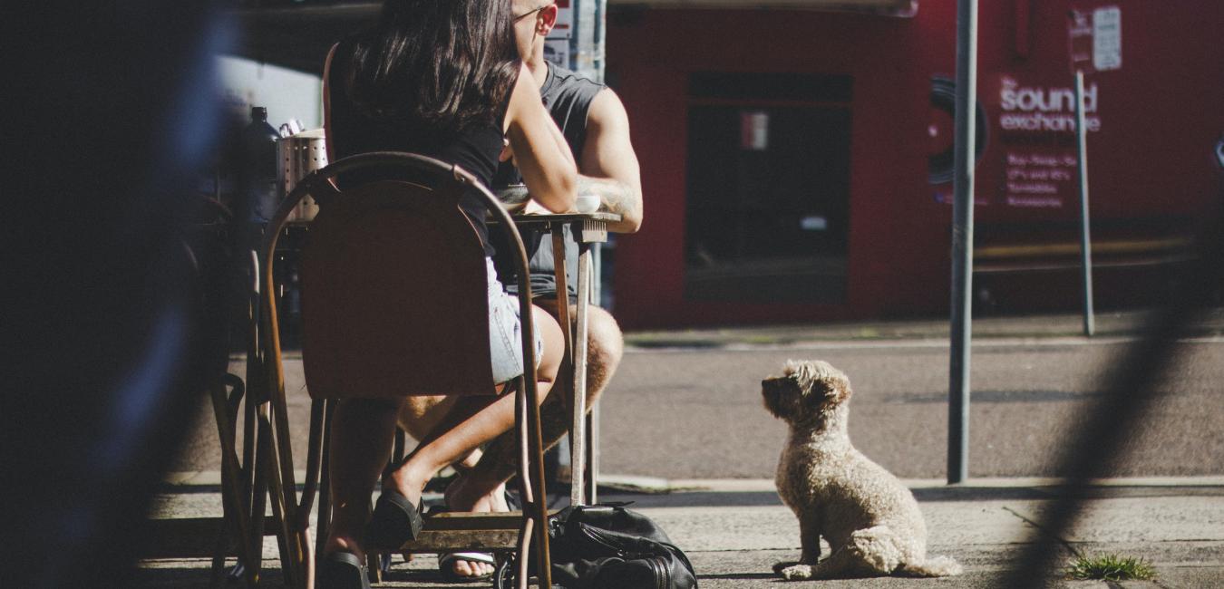 Бары, пабы, рестораны: 20 заведений в Киеве, куда пускают с собаками, фото-1, Photo by Tim Cooper
