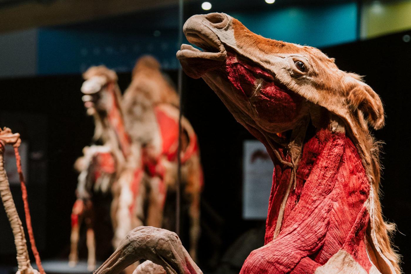 Забальзамированные животные в Киеве: где в столице можно увидеть уникальную выставку, ФОТО, фото-2, H2D Exhibitions