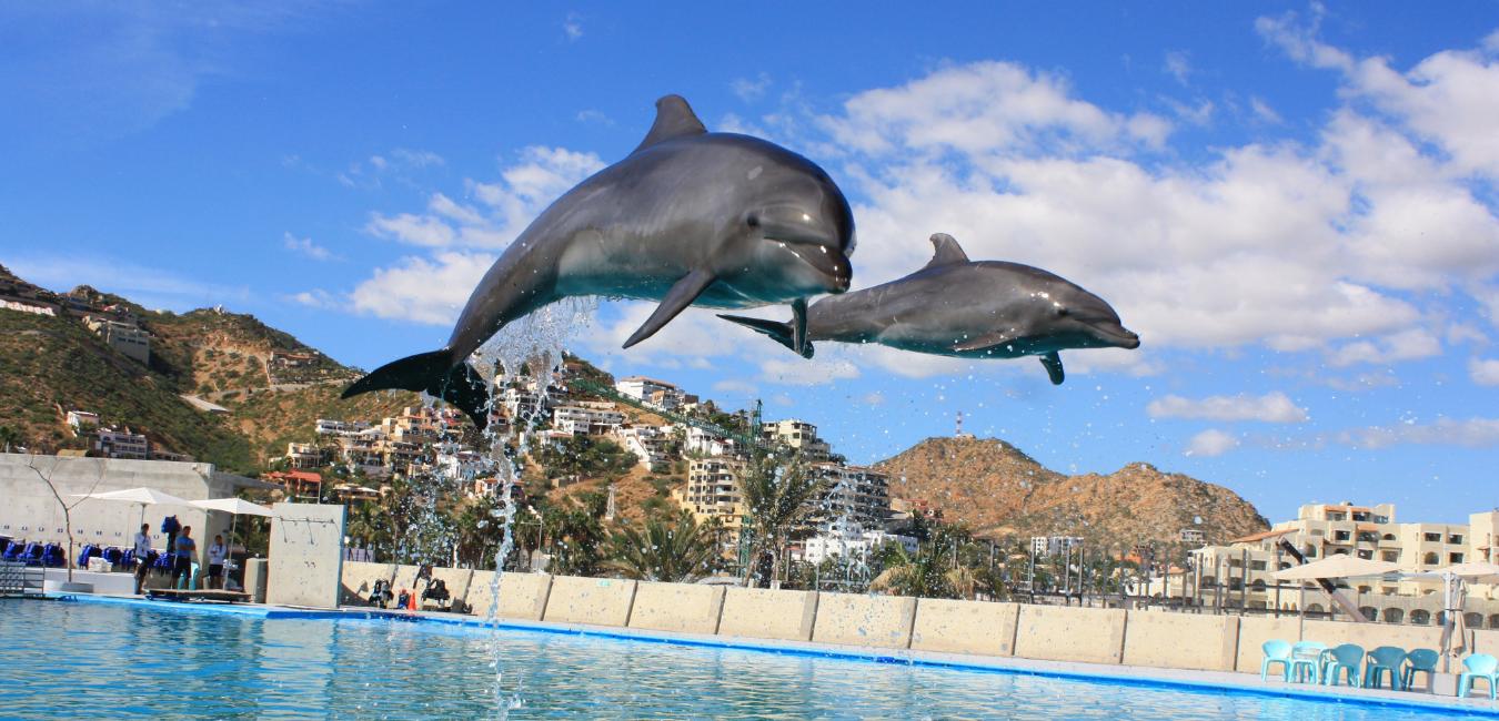 Дельфинарии и океанариумы Киева: цена, отзывы и как добраться, Photo: Ranae Smith