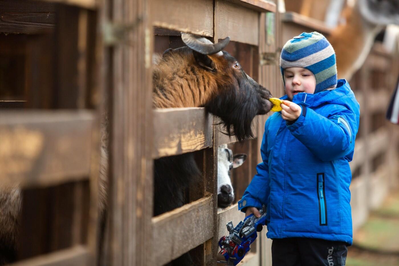 Куда сходить с детьми на новогодние праздники в Киеве?, фото-5
